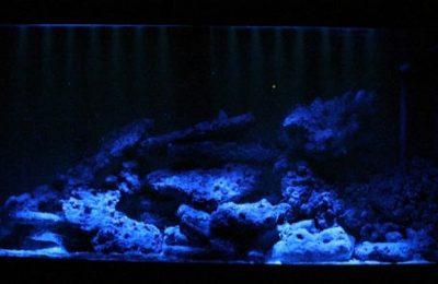 Luce lunare in acquario