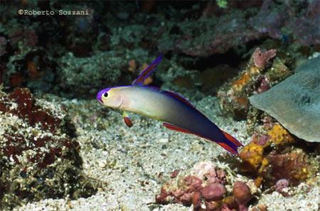 Pesci acquario marino Decora