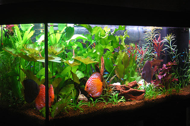 L'acquario di Gaetano Perego
