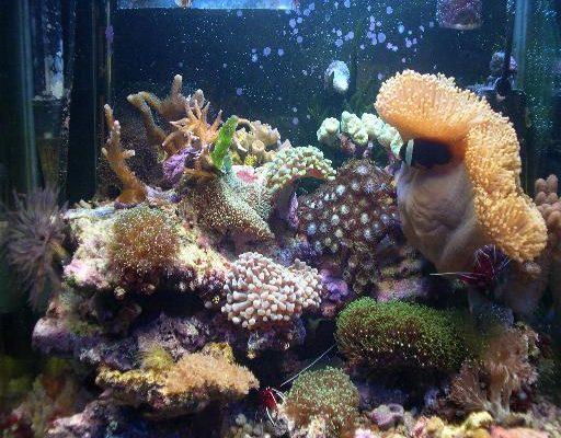 L'acquario di Curzio
