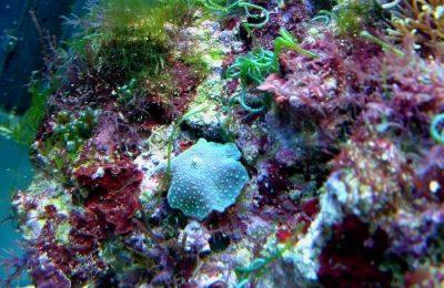 alghe in un nanoreef