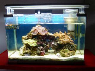 L'acquario di Alessandro Agostini