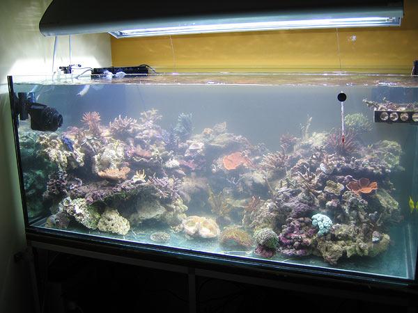 L'acquario di Matteo Algranati