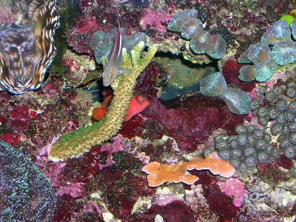 L'acquario di Gabriele Calcagna