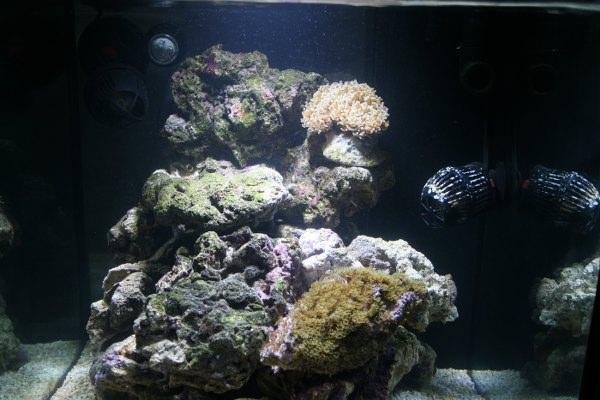 L'acquario di Andrea Trevisan