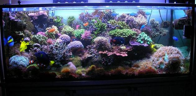 L'acquario di Luca Paolini