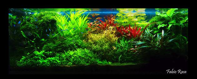 L'acquario di Fabio Rasa
