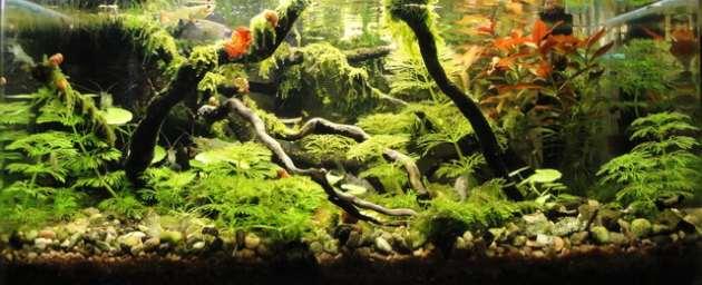 L'acquario di Giuseppe Giunta