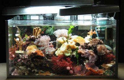 L'acquario di LAPStaxme