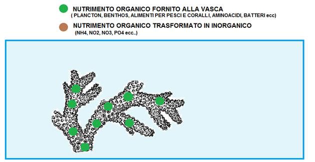 nutrimento organico acquario marino