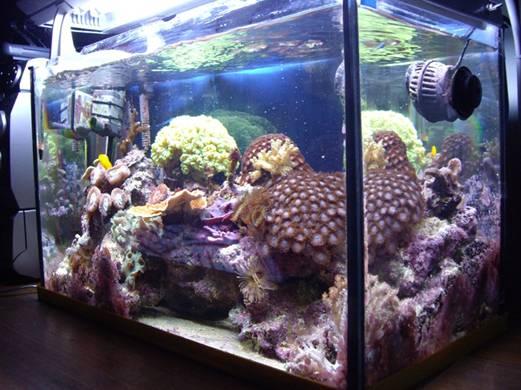 L'acquario di Riccardo Sciamone