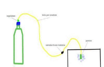 CO2 a lievito
