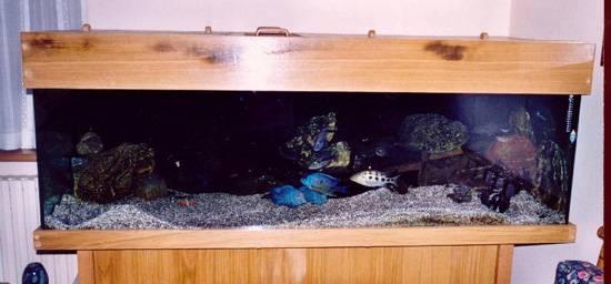 Realizzare un Malawi acquario 750 lt