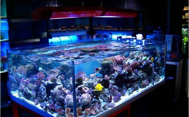 L'importanza della luce in acquario