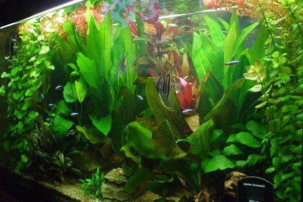 L'acquario di Marco Crotti