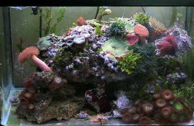 L'acquario di Netproweler