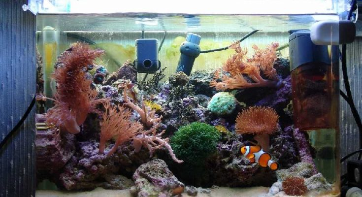 L'acquario di Ubi95