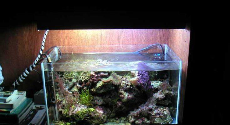 L'acquario di Pietropaoli