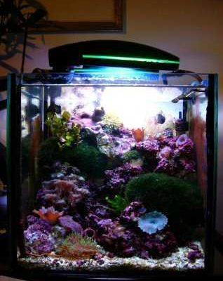 L'acquario di Zenobi Alessio