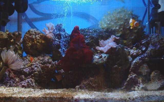 L'acquario di Ostiasurfer