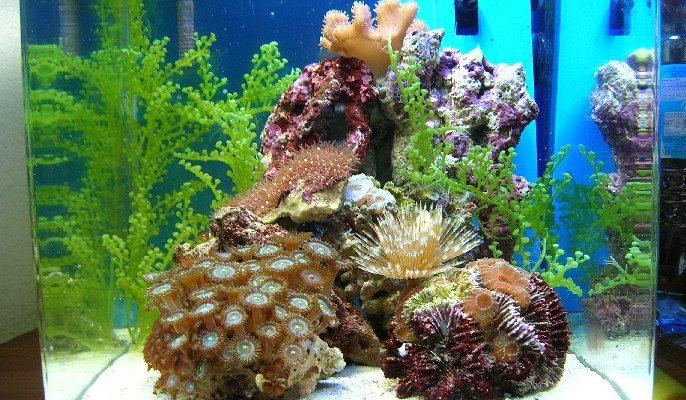 L'acquario di Barbapapa