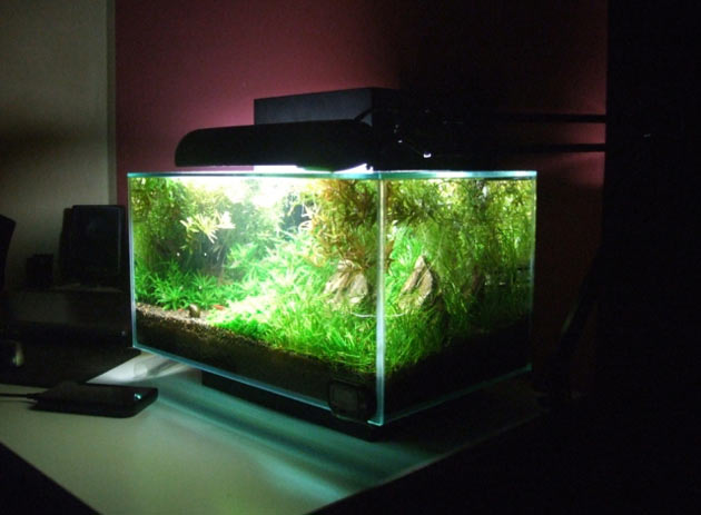 L'acquario di Marco Guerrera