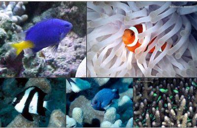 Alimentare e allevare i pesci nei nanoreef