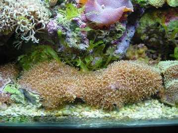 L'acquario di Antani
