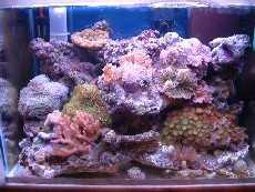 L'acquario di Alfri