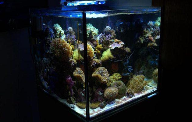 L'acquario di Giuseppe Iapoce