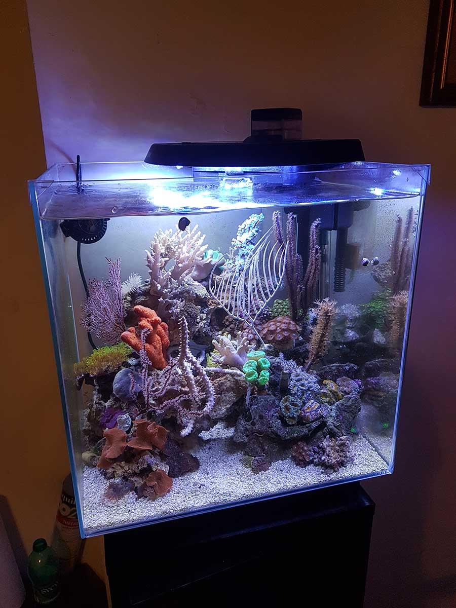 acquario di Nazzareno Spazzafumo Newamore