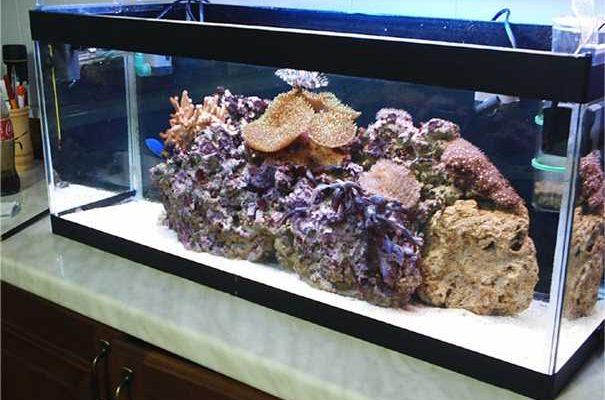 L'acquario di Fufy