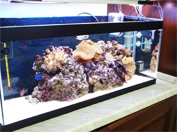 acquario di Tonino Corso