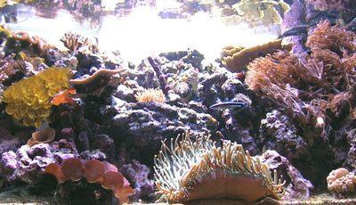 acquario di Angelo Castiello