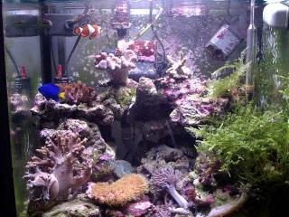 acquario di Niko