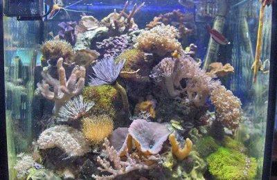 L'acquario di Rei