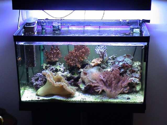 Plafoniere Per Nanoreef : L acquario di luigi piacentile nanoreef made in italy acquaportal