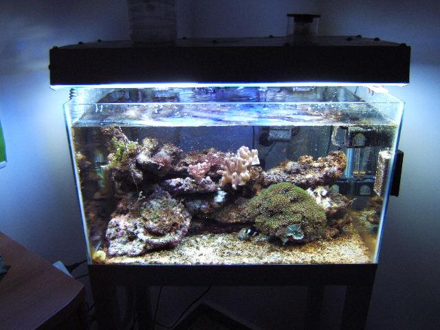L'acquario di GCDevil