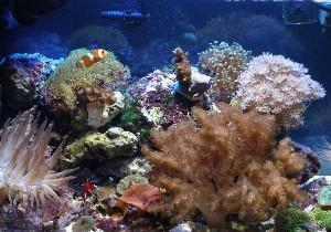 L'acquario di Manrey