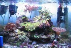 acquario di Dario Zingatti