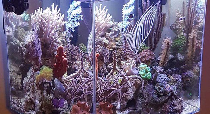 acquario di Nazzareno Spazzafumo