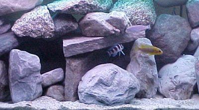 acquario per i battitori delle rocce