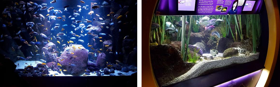 new-york-aquarium
