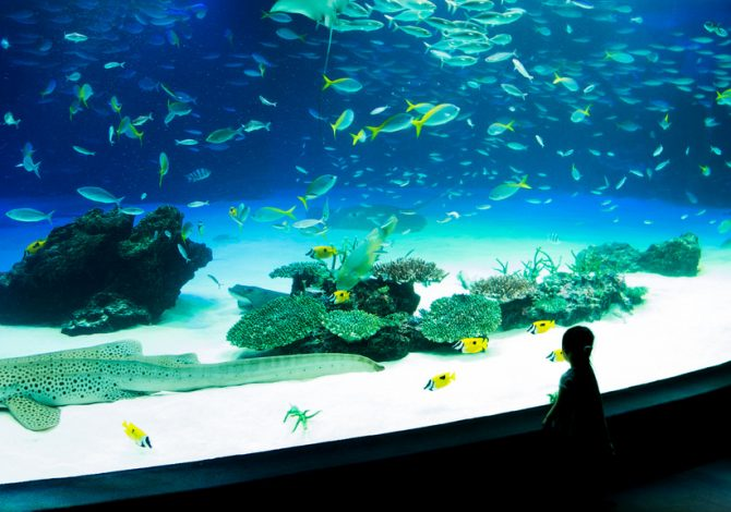 Tokyo Aquarium