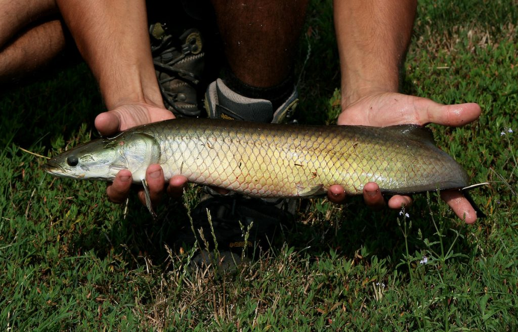 River Monsters Italia