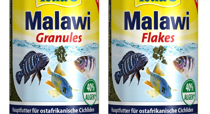 tetra malawi
