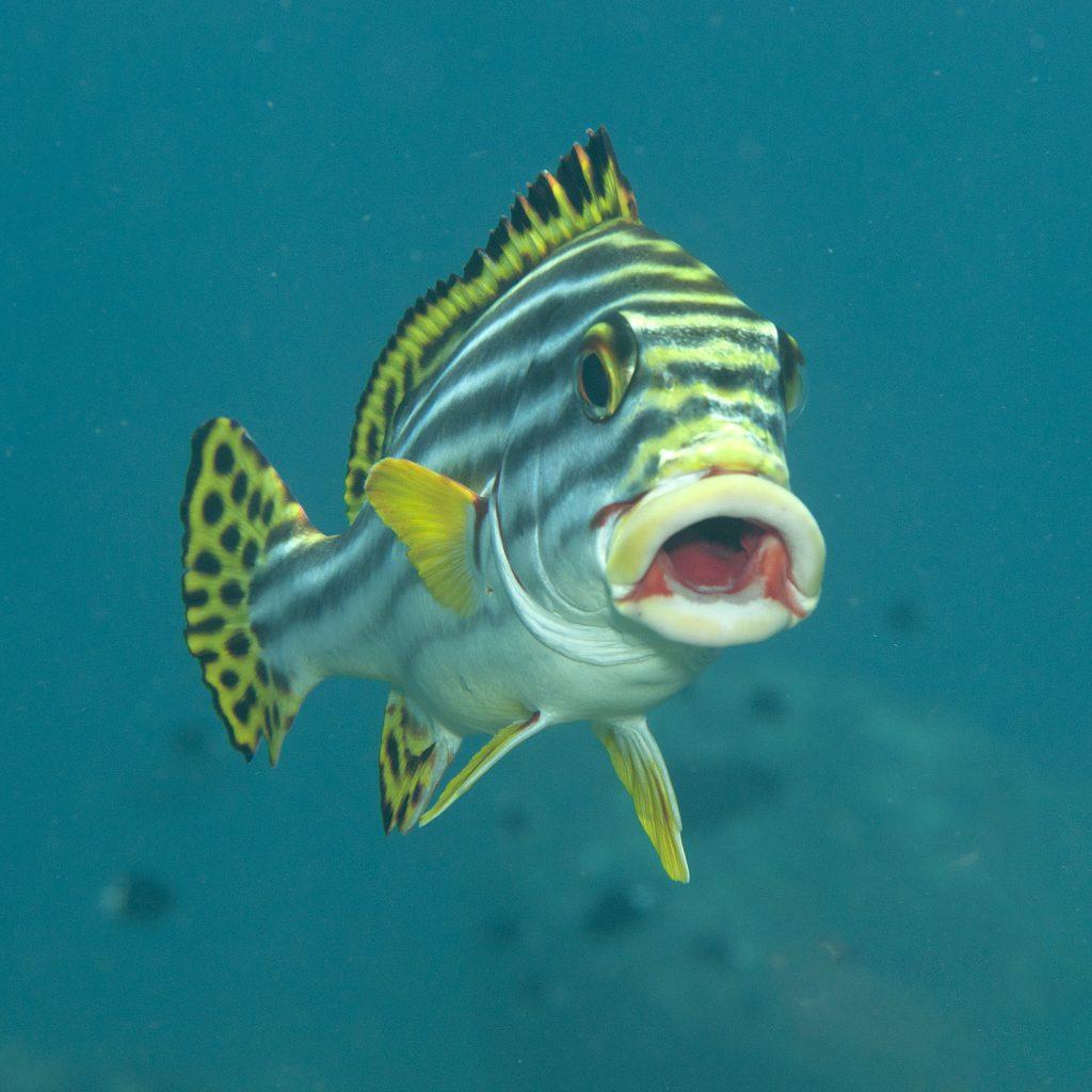 benessere dei pesci