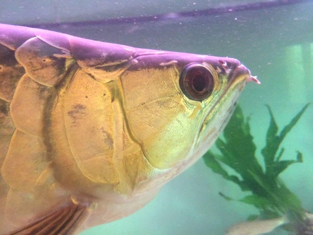pesce drago 4