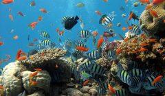 allevare pesci tropicali