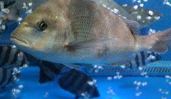 emozioni pesci